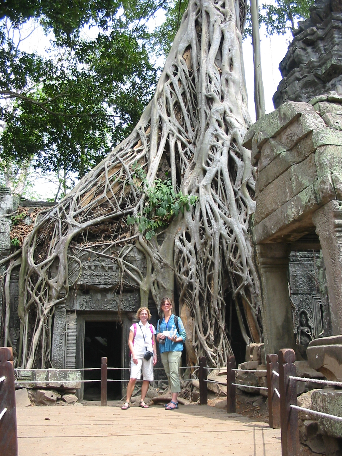 The famous Ta Prohm Temple at Angkor Wat.