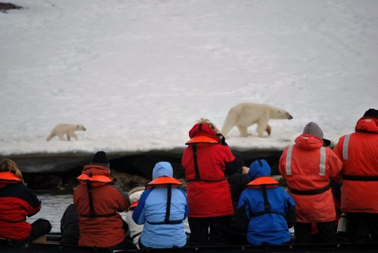 Polar bear and cub pass along the shoreline.