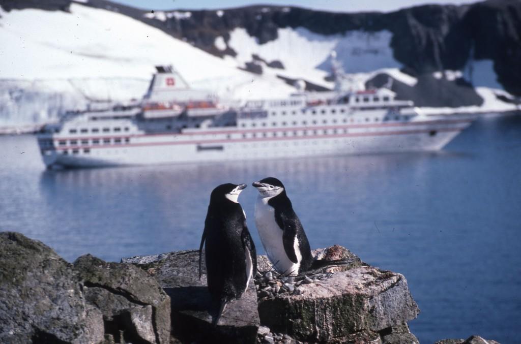 Chinstrap penguins having a natter at Half Moon Bay, Antarctica. * Photo: Ted Scull