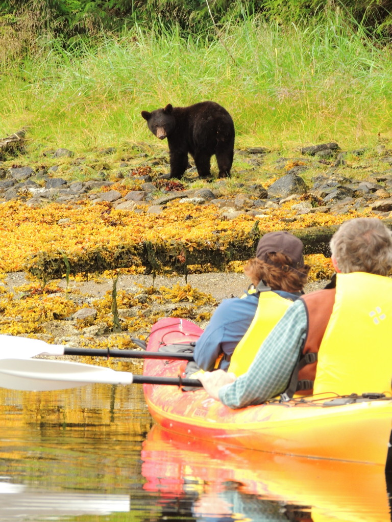 Kayakers and a bear face off. * Photo: Alaska Dream Cruises