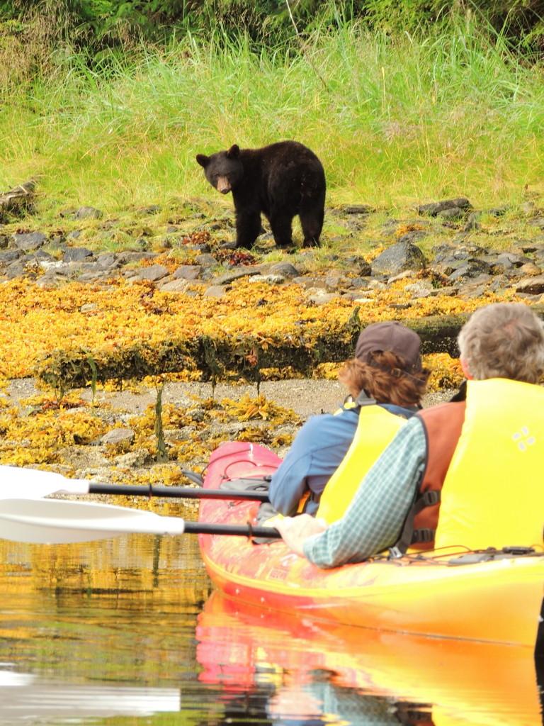 Kayakers and a bear face off. * Photo: Alaska Dream Cruises
