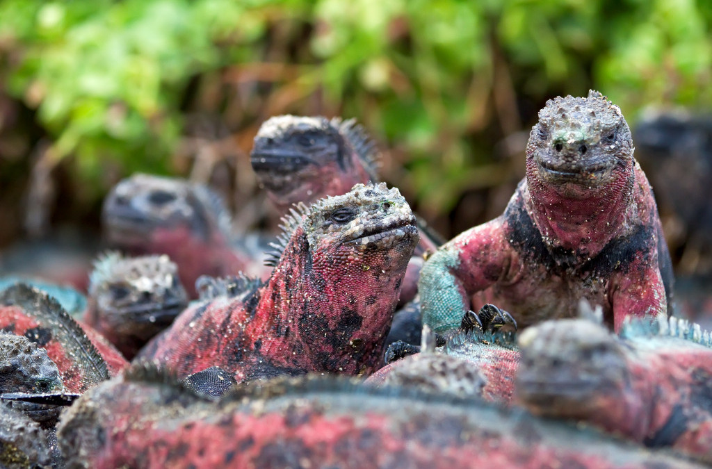 Round-up: Galapagos Overview & List of Small Ship Cruises to the Galapagos