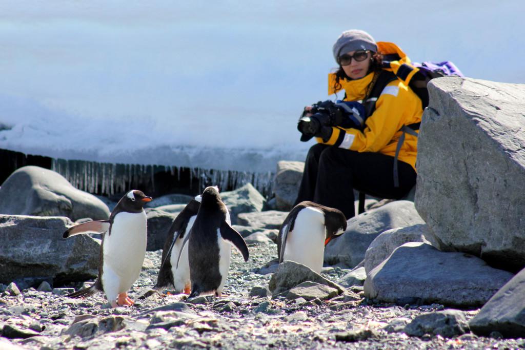 Curious penguins in Antarctica. * Photo: Quark Expeditions