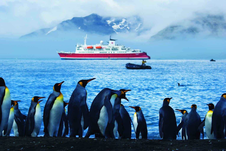 No shortage of South Georgia Penguins in the Antarctica. * Photo: © G Adventures, Inc.