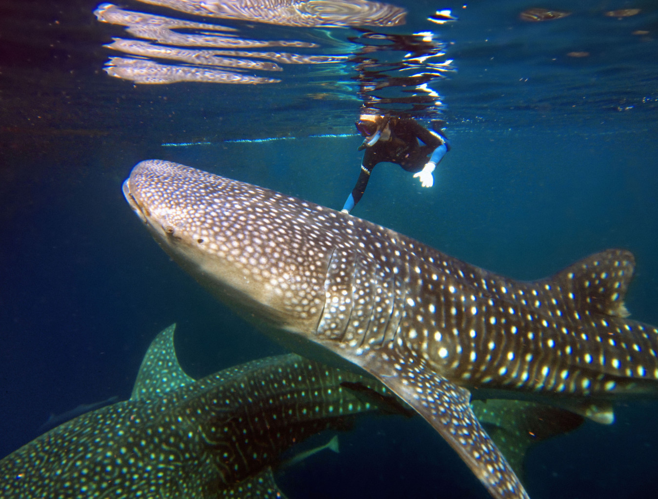 Snorkeling and scuba diving are a big draw in the eastern islands of Indonesia. * Photo: Silolona Sojourns