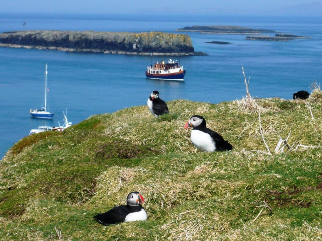 Puffins on Lunga. * Photo: Majestic Line