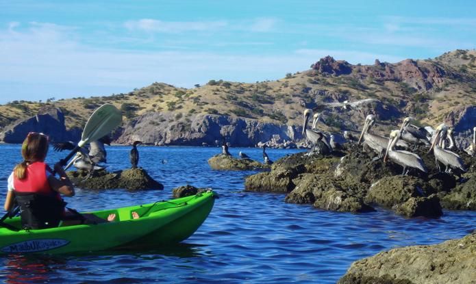 Baja's Bounty:Exploring the Unique Biosphere of Mexico's Sea Of Cortez with UnCruise Adventures