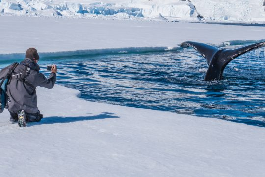 Richard photographing a breaching whale in Antarctica. * Photo: Kristin Braisted