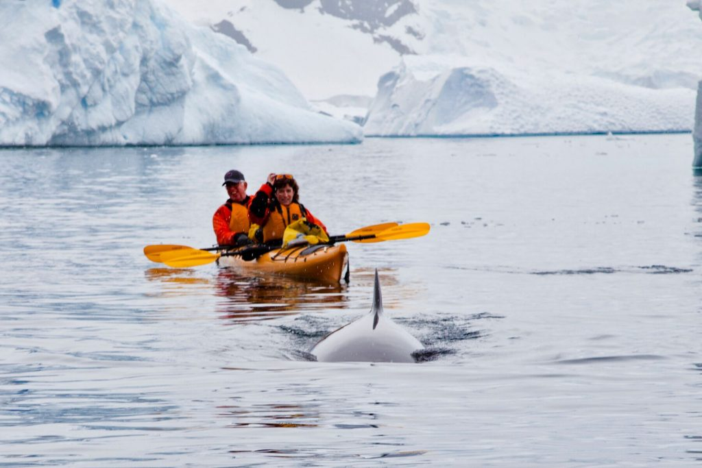 Following a whale, One Ocean Expeditions