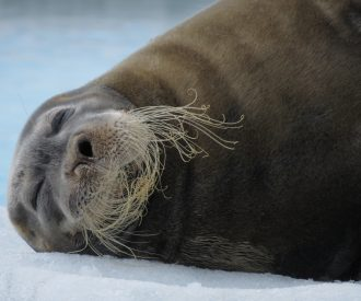 Polar Guide Richard White's Arctic Wildlife Photography