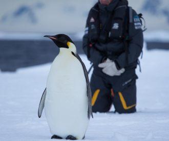 Polar Climate Change