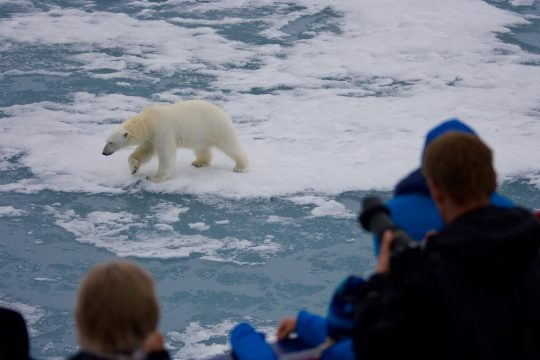 Arctic wildlife
