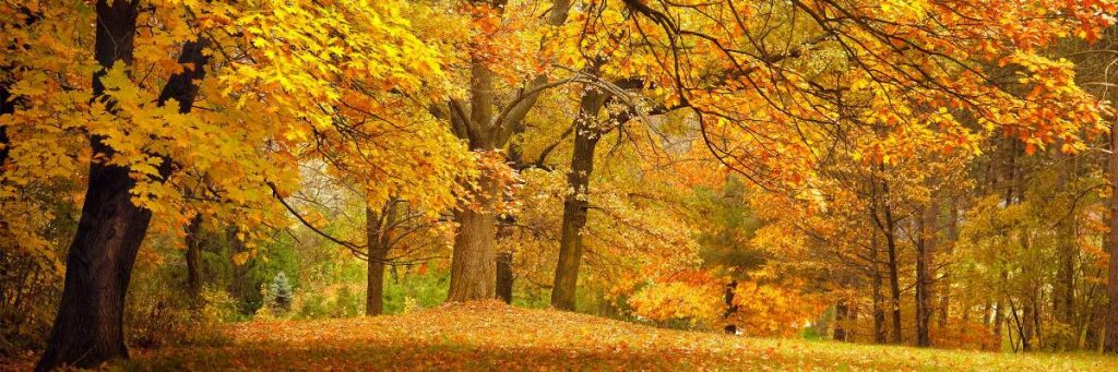 Fall Foliage Small Ship Cruises