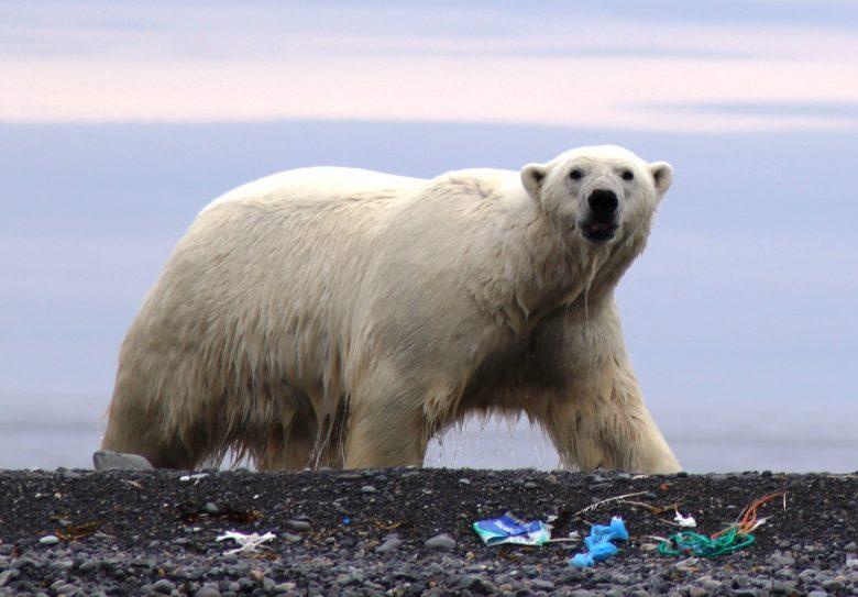 quirky-cruise-marine-plastic-pollution-polar-bear-on-littered-beach
