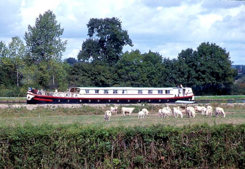 quirky-cruise-burgundy-barging-photo-of-cattle-next-to-boat