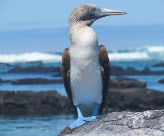 Six Day Galapagos Islands Cruise