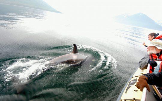 UnCruise Adventures to Alaska
