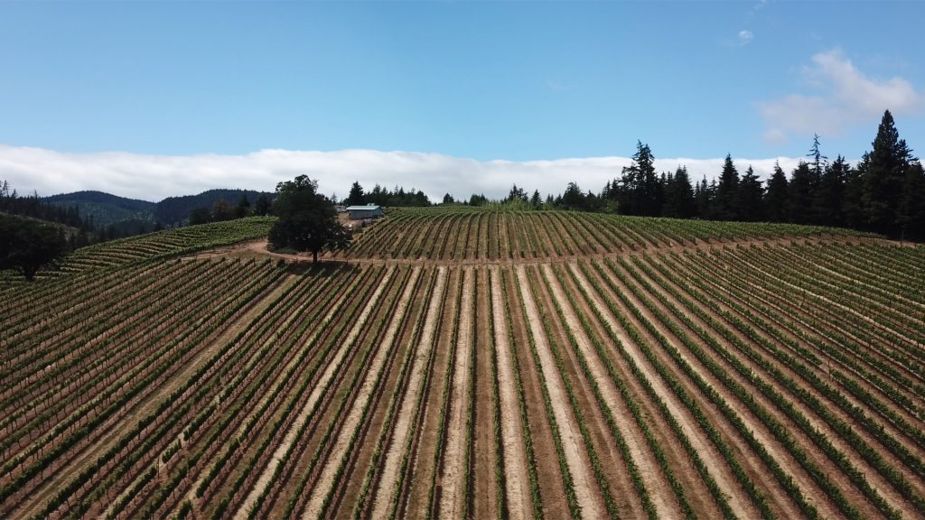 Overhead view of a vineyard near Hood River on a Columbia & Snake Rivers cruise