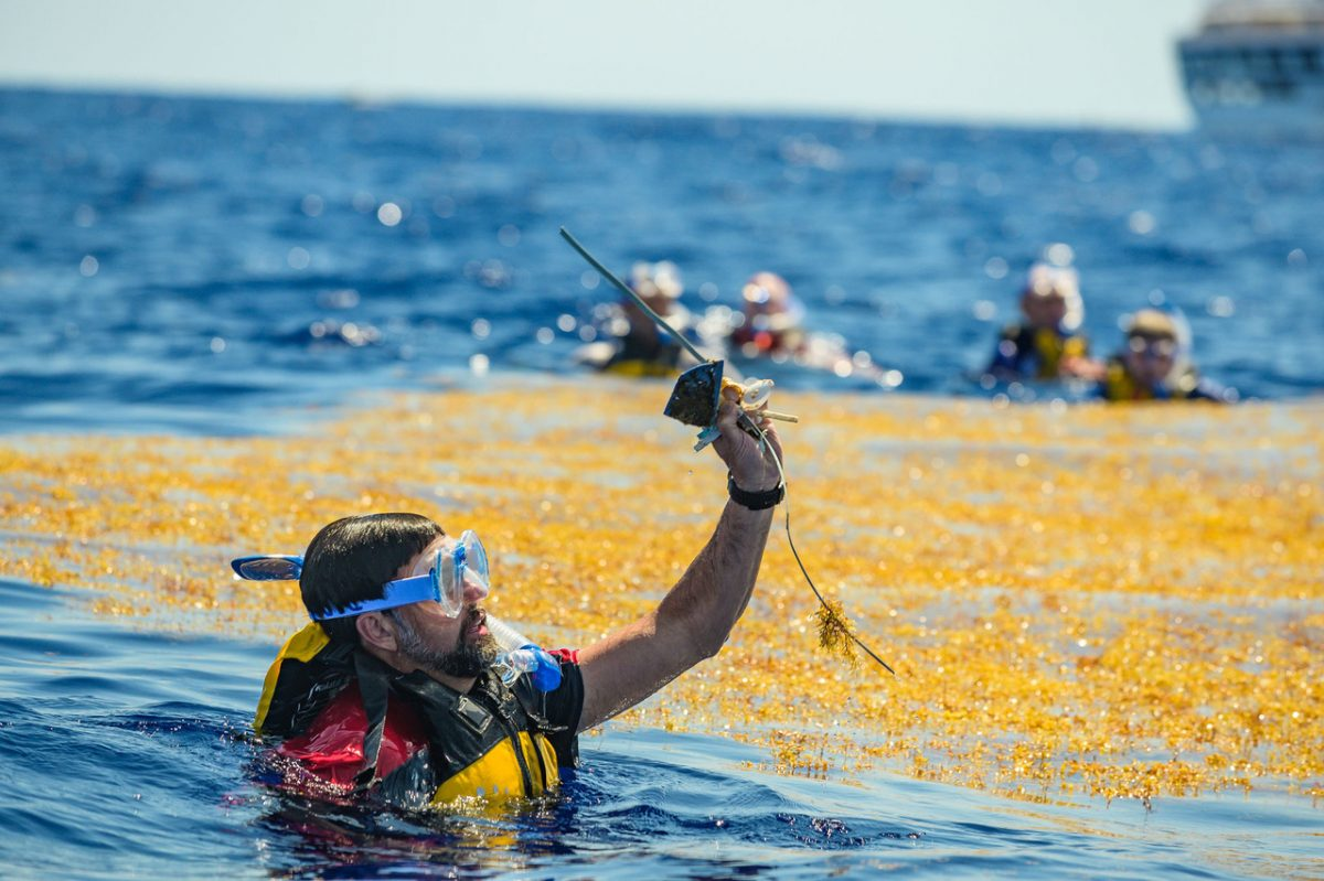 The group snorkeled around a large patch of sargassum in almost 8,000 feet of water.
