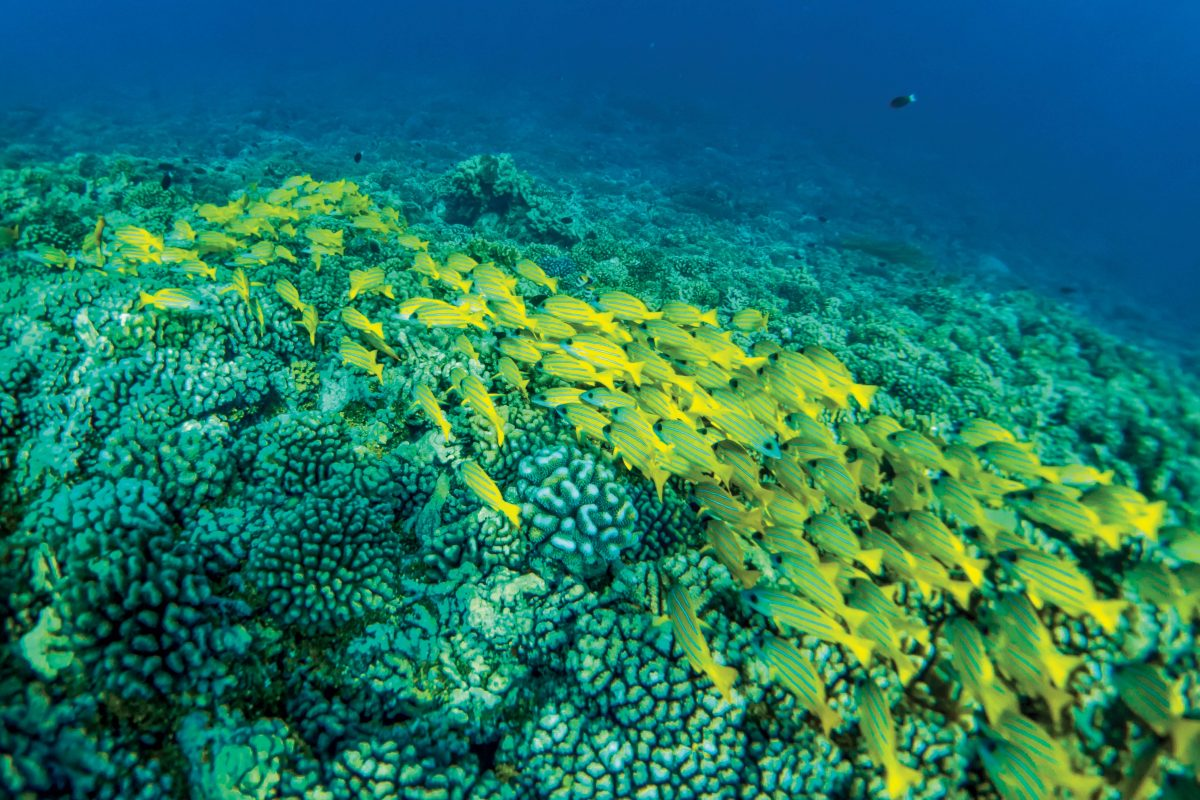 snorkeling south pass fakarava on a Lindblad Expeditions cruise
