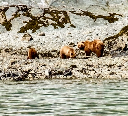 Mama Brown Bear and Two Cubs