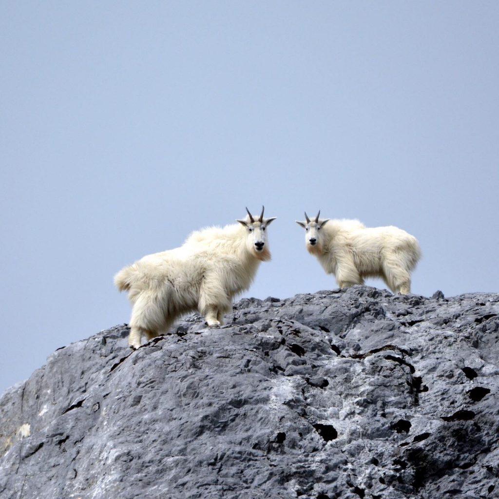 Alaska cruise wildlife