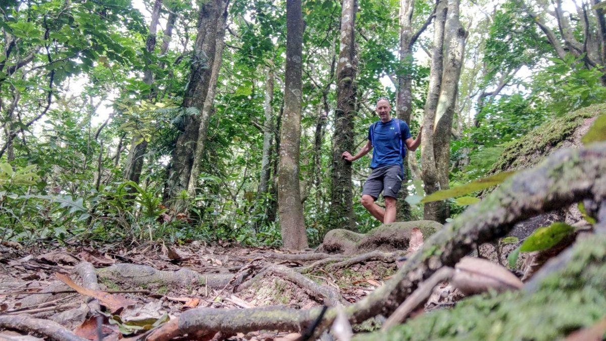 Otari-Wilton's Bush trail
