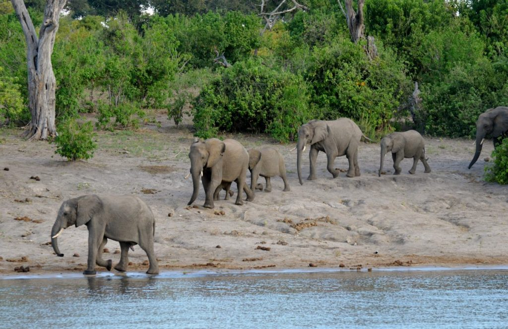 African River Cruising