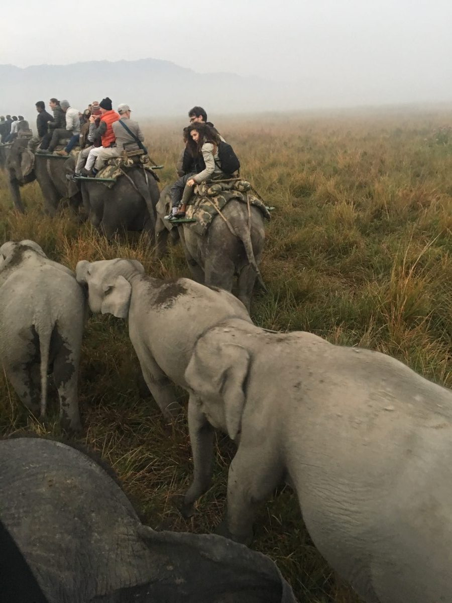 elephant safari Brahmaputra river cruise