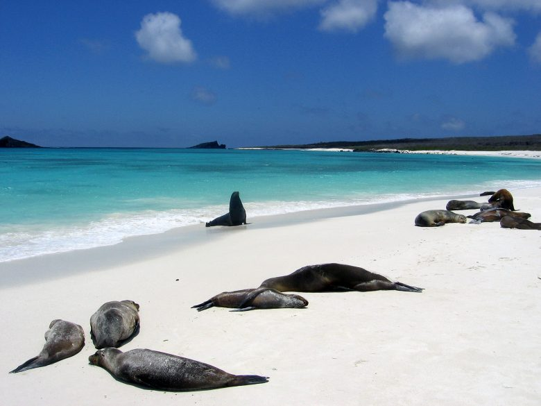 Quasar Expeditions Seals