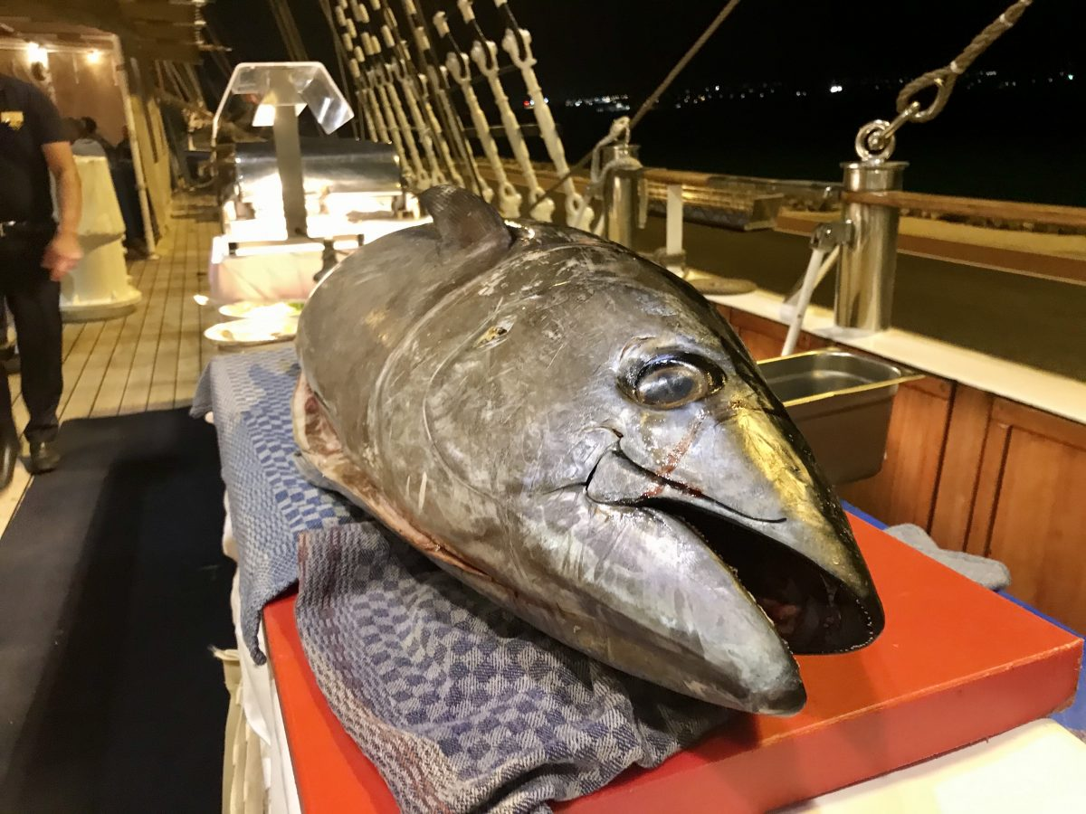 A huge tuna on a canary islands cru