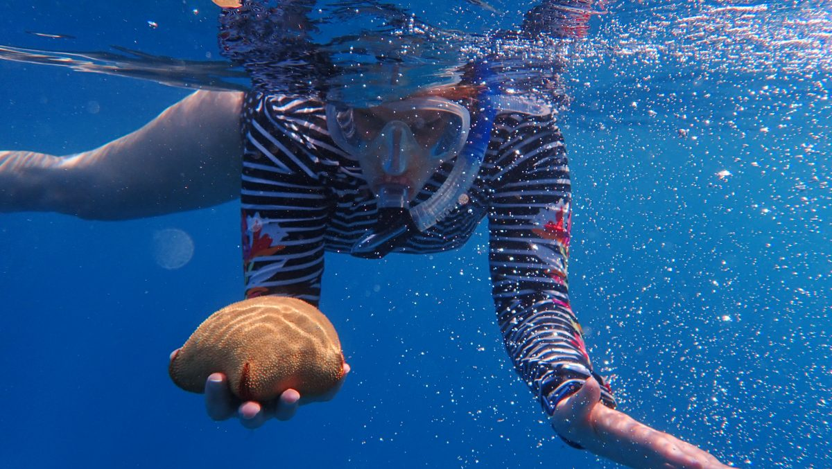 Hawaii cruise snorkeling
