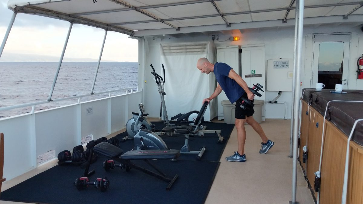 Safari explorer gym weights