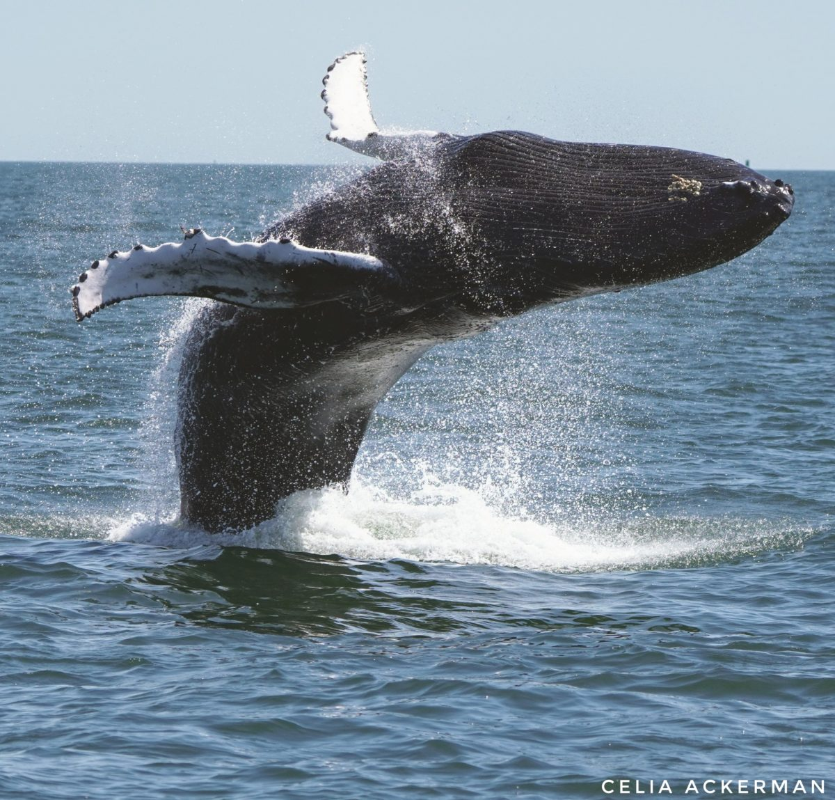 Whale Watching Tips