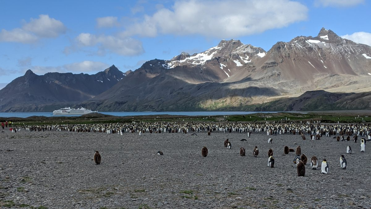 Fortuna Bay Antarctica