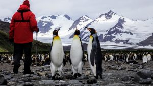 Antarctica Cruising with Abercrombie & Kent and Ponant