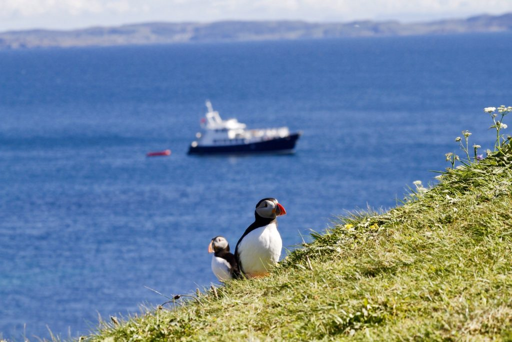 puffins on a Hebrides Cruises adventure