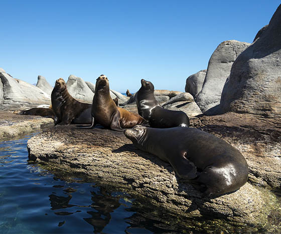 Sea lions colony, Loreto, Mexico
