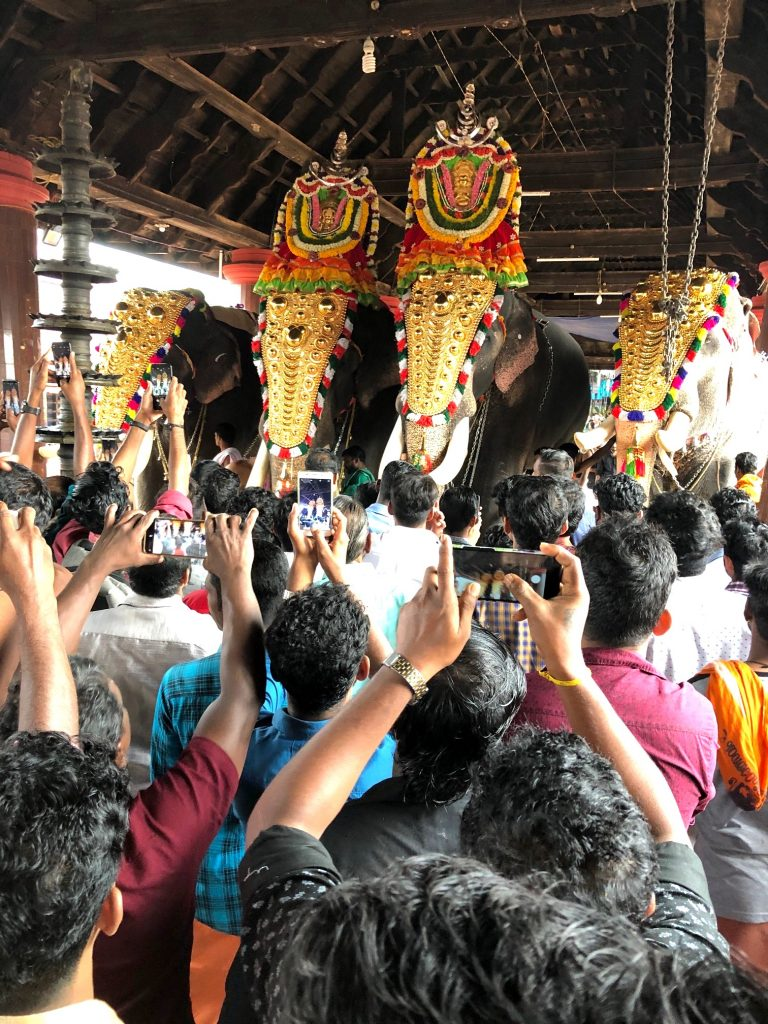 Kerala temple elephants
